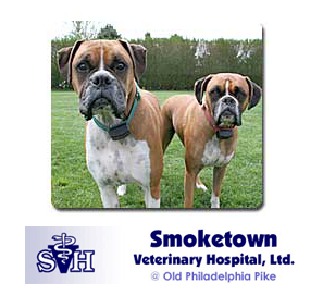 DrChampagne_Smoketown